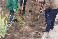 озеленення пришкільної території